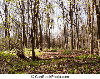 A Bunch of Trees in the Middle of a Forest