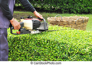 A gardener trimming hedge with trimmer machine