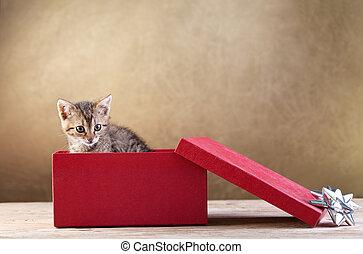 A kitten for present