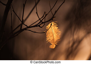 A little feather on the branch in sunset light.
