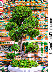a small beautiful tree growing near a temple in Thailand