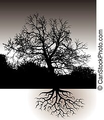 A Tree with Roots Landscape