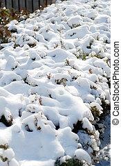 Accumulated snow