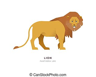African lion wild animal on isolated background
