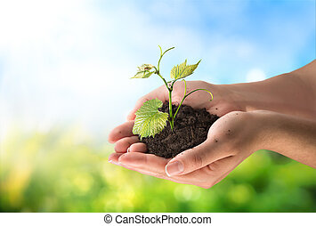 agriculture concept, little plant in hands