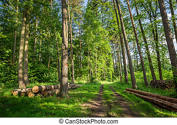 Amazing spring in the green forest, Poland