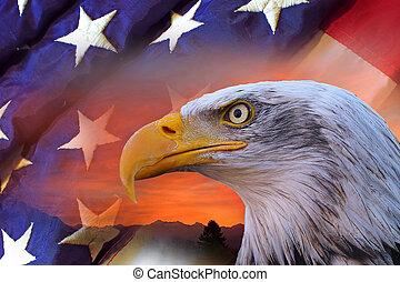 American bald eagle and flag