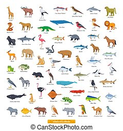 Animals of Africa Collection