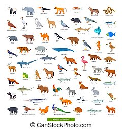Animals of Asia Collection