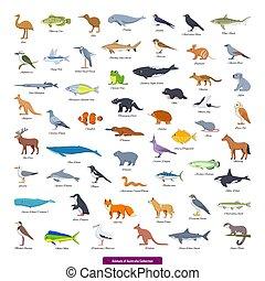 Animals of Australia Collection