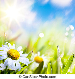 art abstract background summer flower in grass with water drops on sun sky