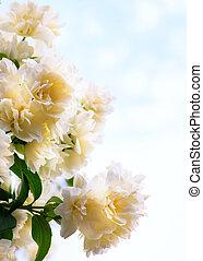 Art jasmine flowers on blue sky background