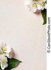 art jasmine spring flowers frame on old paper background