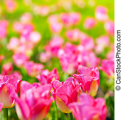 art spring flowers background