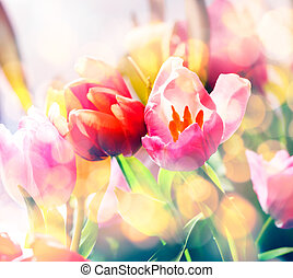 Artistic faded background of spring tulips