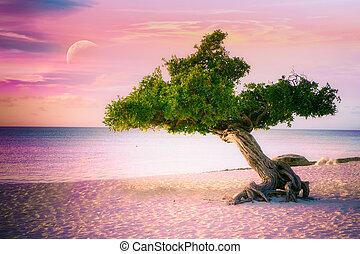 Aruba tree sunset