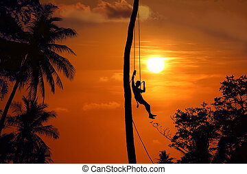 Asian man climbing the coconut trees to harvest in the morning,