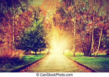 Autumn, fall park. Wooden path towards the sun, light