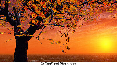 Autumn sunset