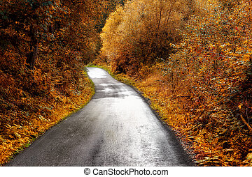 Autumn winding road in the forest