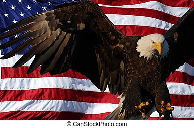 Bald Eagle with an American Flag background