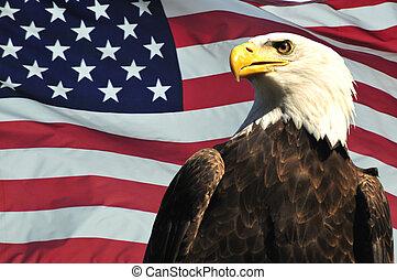Majestic Bald eagle and USA flag