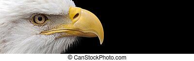 bald eagle banner