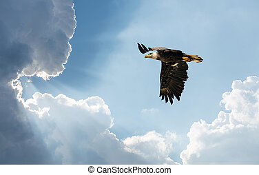 Bald Eagle Flying in clouds towards the Sun