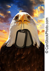 Bald Eagle holds a dog tags in his beak, at the background sunset sky.