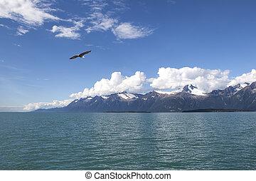 Bald Eagle in Southeast Alaska