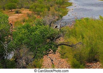 Bald Eagle Natural Habitat