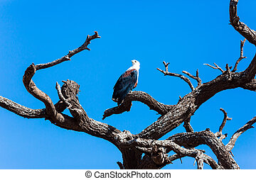 Bald eagle perched on a thick branch