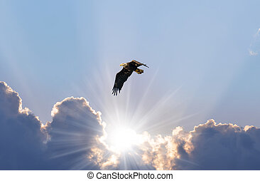 Bald Eagle Soaring In the Sky Over the Sunrays Coming Through The Clouds