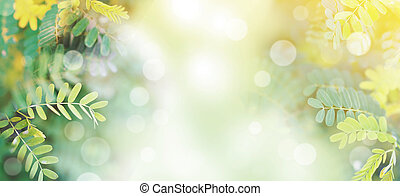 banner tropical green leaves for spring background.