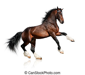 Bay horse isolated on white background.
