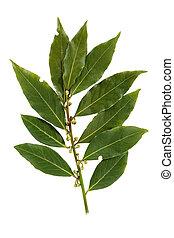Bay leaf-fragrant culinary seasoning isolated on white background