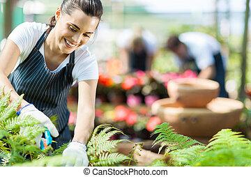 nursery worker working in greenhouse