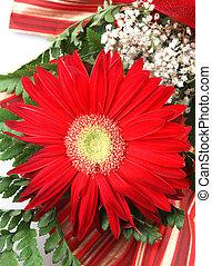 beautiful gerbera flower isolated on white