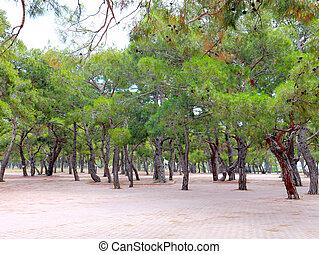 park recreation area