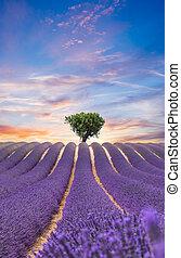 Beautiful landscape of blooming lavender field