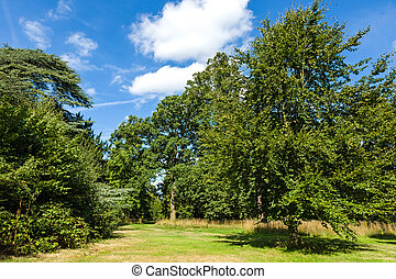 Beautiful Lush Green Woodland Park Garden