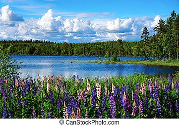 Beautiful Scandinavian summer landscape with lupin flowers and lake