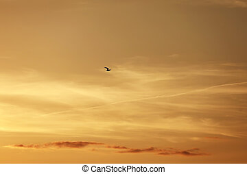 Beautiful Seagull flying on the sunset orange sky background