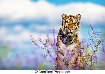 Beautiful Tiger Behing Purple Sage