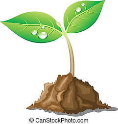 .Young sprout in ground. Vector illustration.