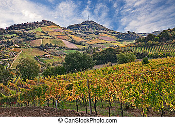 Bertinoro, FC, Emilia Romagna, Italy: landscape of the countryside with vineyards