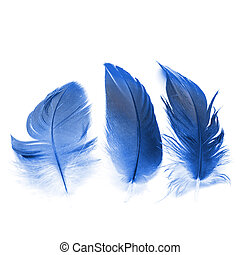 bird feathers ioslated