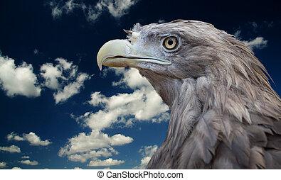 Bird of prey. Zoo in Lipetsk. Russia
