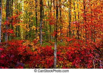 Vivid fall colored foliage in a woodsy forest in autumn