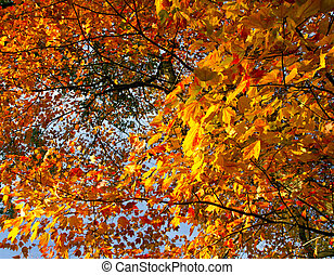 Bright Colorful Fall Leaves in Central Park NYC